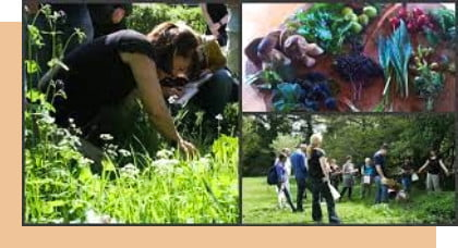 people foraging for wild food